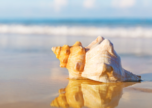 Do not remove shells and sand from the beaches