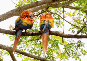 FundaKohli donates 3 nests for macaws for the conservation program