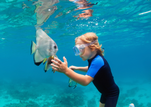 Look but don't touch: reasons not to touch marine life
