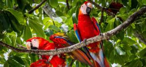 Watch the birth of macaws on live video streaming at Hotel and Club Punta Leona!